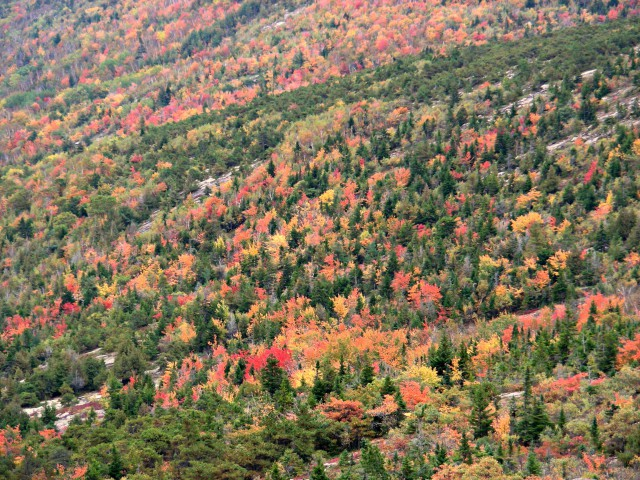 Foliage all'Acadia National Park (Maine, USA)
